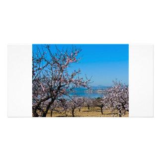 Almond Blossom 3 Customized Photo Card