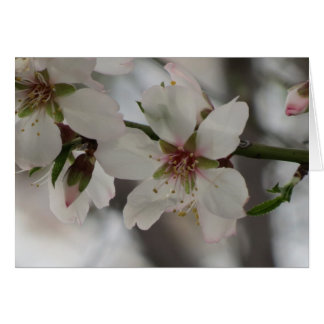 Almond Blossom - Any Occasion Card