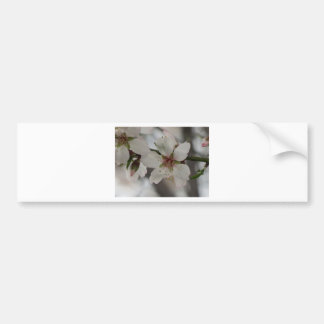 Almond Blossom in Sierra Espuna, Murcia, Spain Bumper Sticker