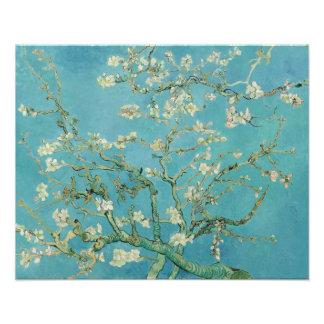 Almond Blossoms by Vincent van Gogh Photo Art