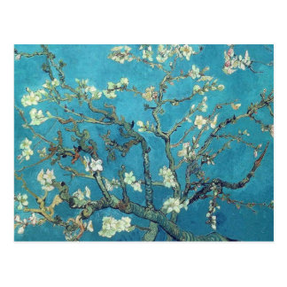 Almond Blossoms Postcard