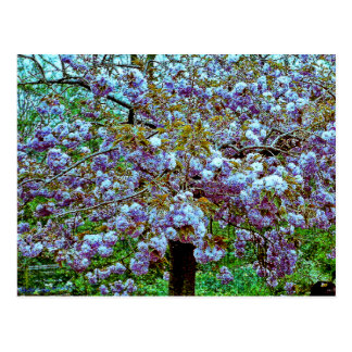 Almond Tree in Monet's Garden Postcard