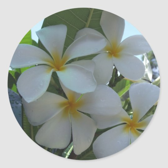 Almost Edible Frangipani Classic Round Sticker