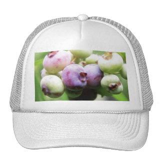 Almost Ripe - Blueberries Cap