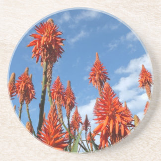 Aloe Arborescens coaster