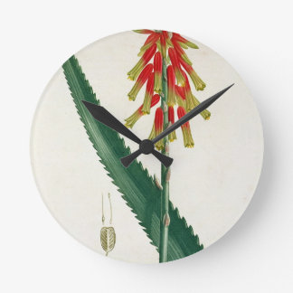 Aloe from 'Phytographie Medicale' by Joseph Roques Clock