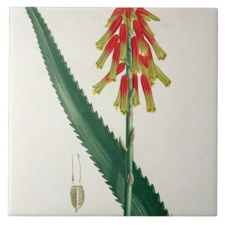 Aloe from 'Phytographie Medicale' by Joseph Roques Tile