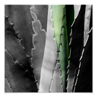 Aloe - Macro Fine Art Photograph in Black & White Poster
