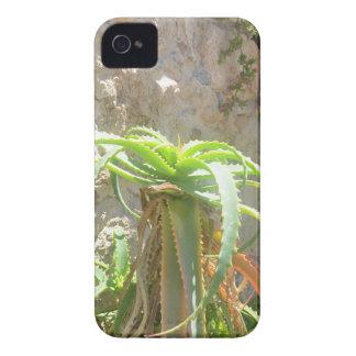 Aloe Plant. iPhone 4 Case