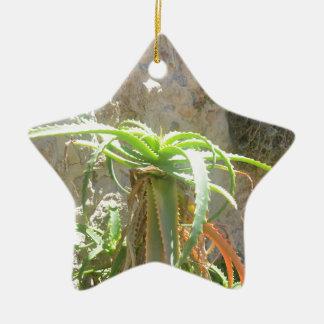 Aloe Plant. Ceramic Star Decoration