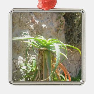 Aloe Plant. Silver-Colored Square Decoration
