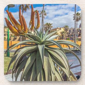 Aloe Vera plant and flowers hard plastic coasters