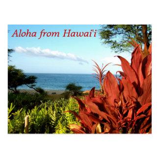 Aloha from Hawaii Post Card