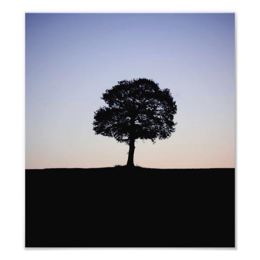 Alone tree photographic print