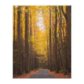 Along the Road Canvas Print