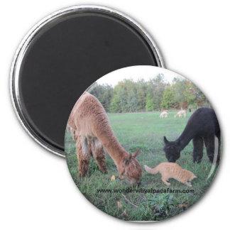 Alpaca and Cats Magnet