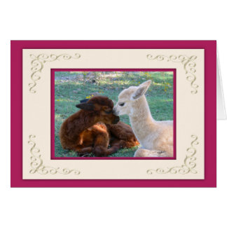 Alpaca Baby Love Valentines Day Cards