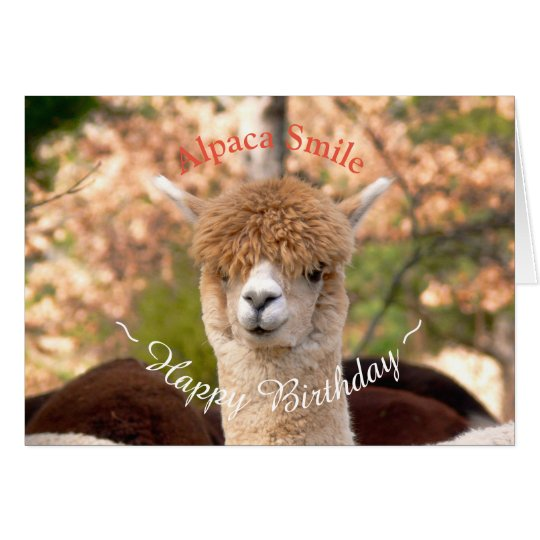Alpaca Belle Birthday Card