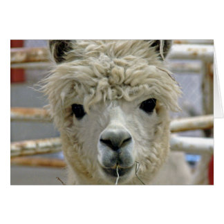 Alpaca Birthday Card