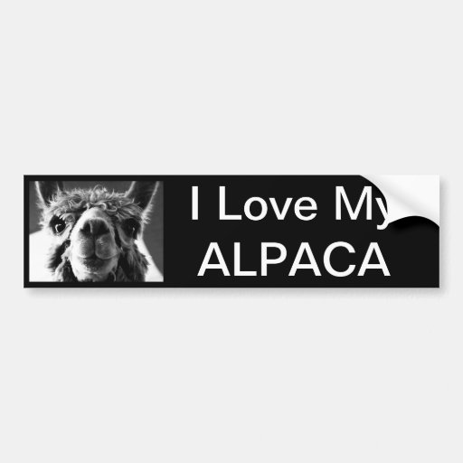 Alpaca Bumper Stickers