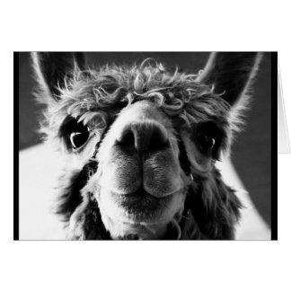 Alpaca Cards