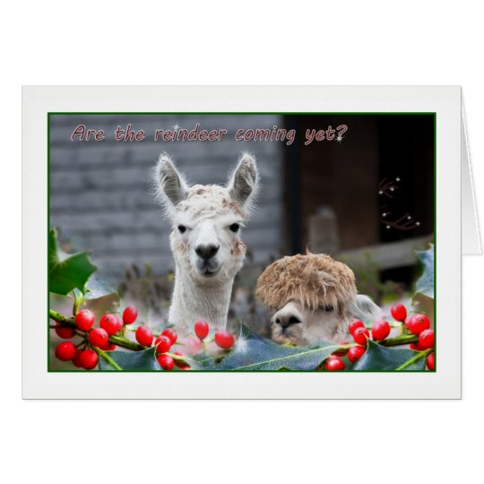 Alpaca Christmas Card