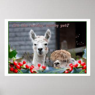 Alpaca Christmas Poster