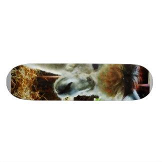 Alpaca Closeup Skate Decks