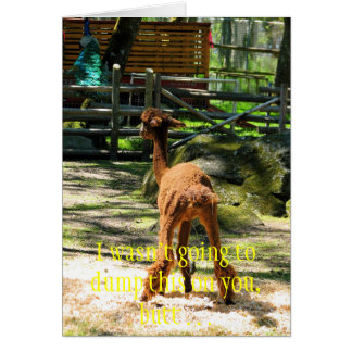Alpaca fun note card