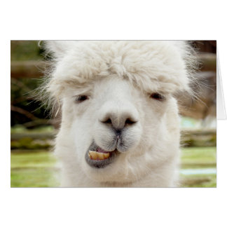 Alpaca Funny Face Card