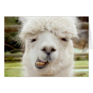 Alpaca Funny Face Greeting Card