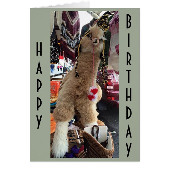 "ALPACA GIVE ""BIRTHDAY ADVICE"" ON HOW TO ENJOY"
