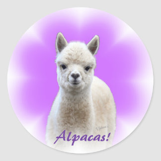 Alpaca Hope Stickers