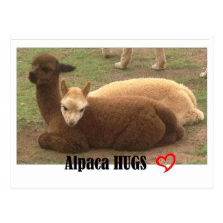 Alpaca Hugs Postcard