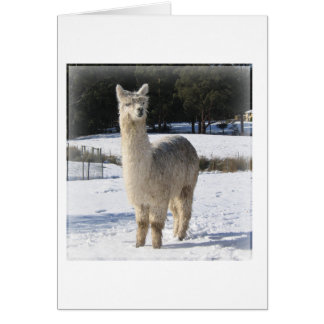 Alpaca In the Snow Card