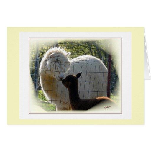 Alpaca Kisses Card
