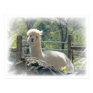 Alpaca Lace Postcard