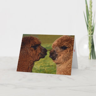 Alpaca Valentine Cards Zazzle Uk