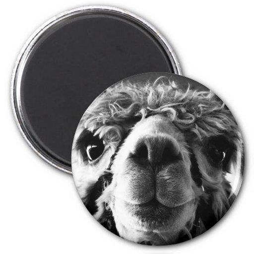 Alpaca Refrigerator Magnet