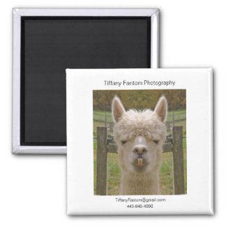 Alpaca Promo Piece Magnet