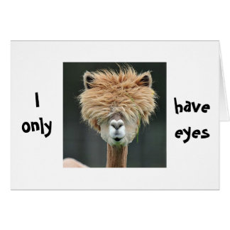 "ALPACA SAYS ""I ONLY HAVE EYES FOR YOU"" GREETING CARD"