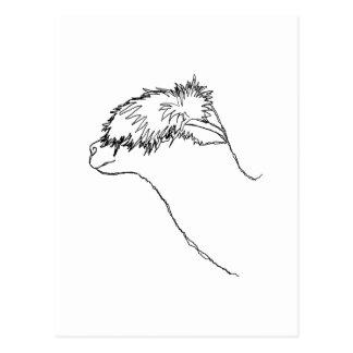 Alpaca Sketch. Postcard