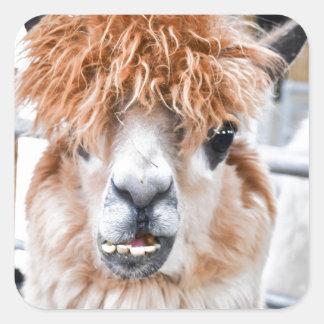 Alpaca Square Sticker
