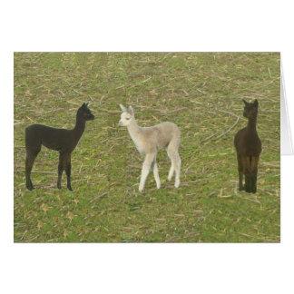 Alpaca Trio Greeting Card