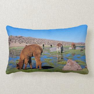 Alpaca (Vicugna Pacos) Grazing In Their Chilean Lumbar Pillow