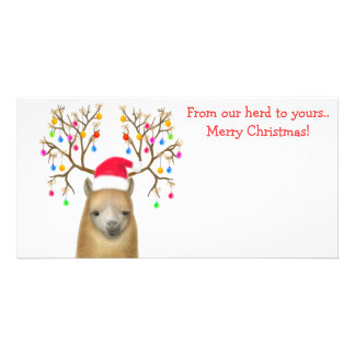 Alpaca Xmas Photo Card