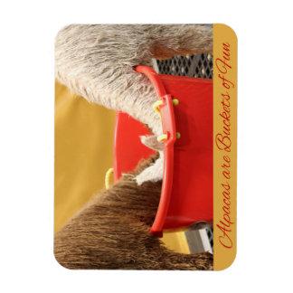 Alpacas are Buckets of Fun Magnet