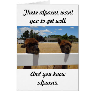 Alpacas in Templeton, California Card