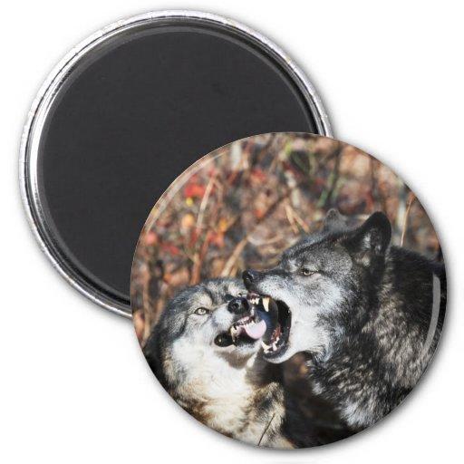 Alpha 6 Cm Round Magnet