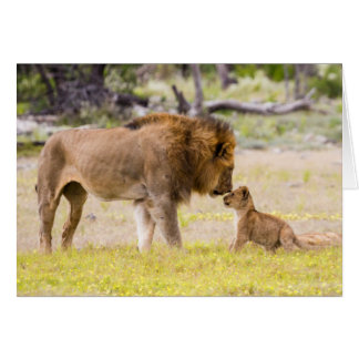 Alpha male lion inspects cub greeting card